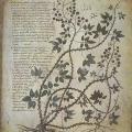Dioscoride de Vienne (début 6e s.)